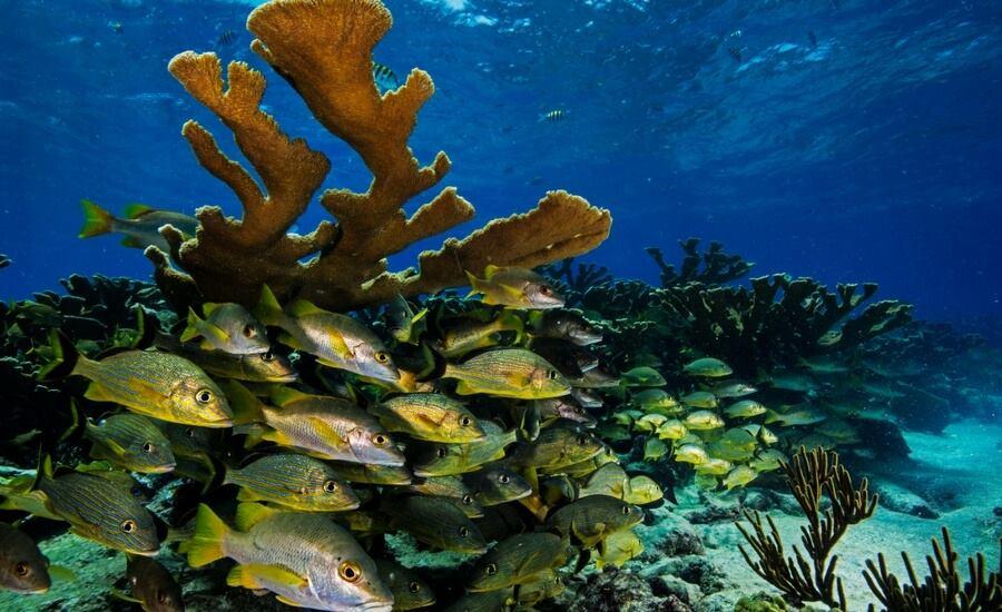 scuba-diving-El-Nido