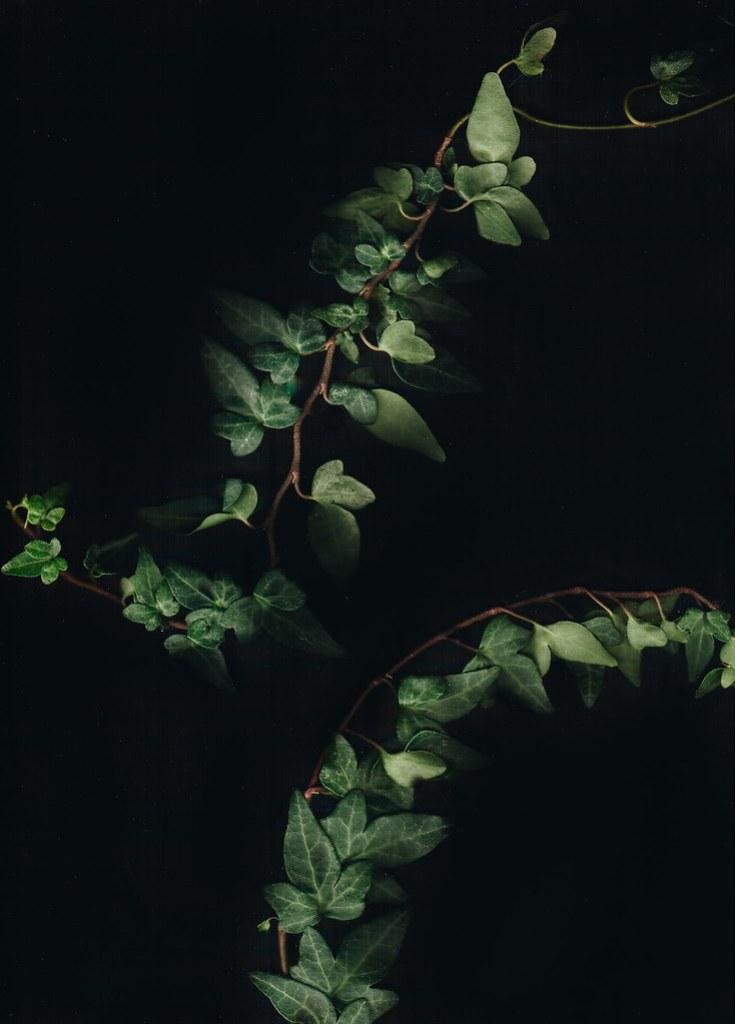 Monthly Makers FOTO - Scanography murgröna - reaktionista.se
