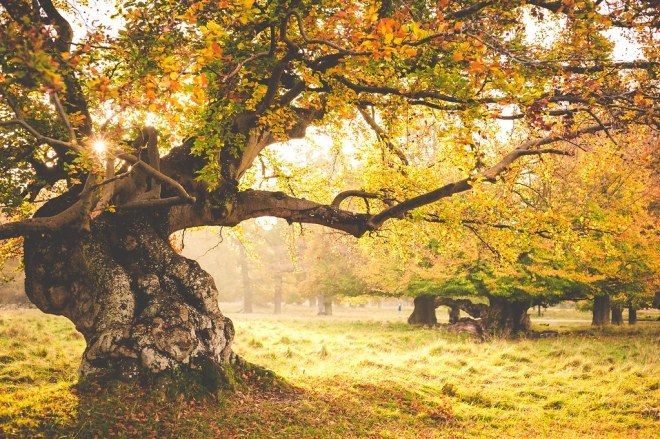 83 of 365: Gnarled Autumn