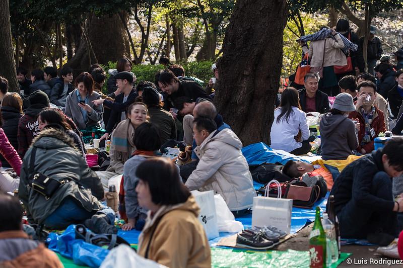 Hanami dans le parc Ueno