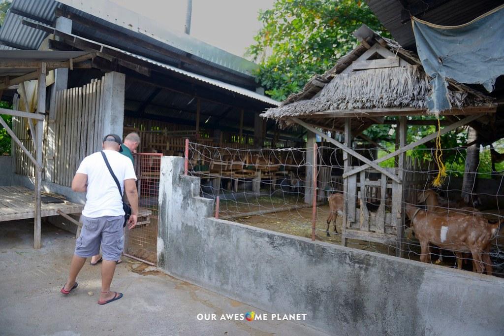 goatfarm8