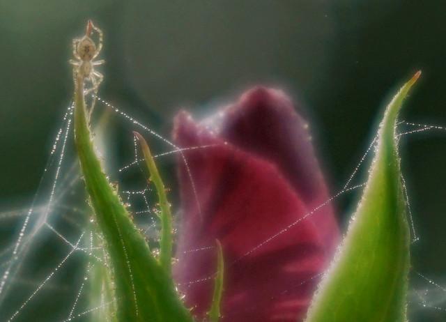 AWS_Spider1_CROP_Trioplan50f2,9
