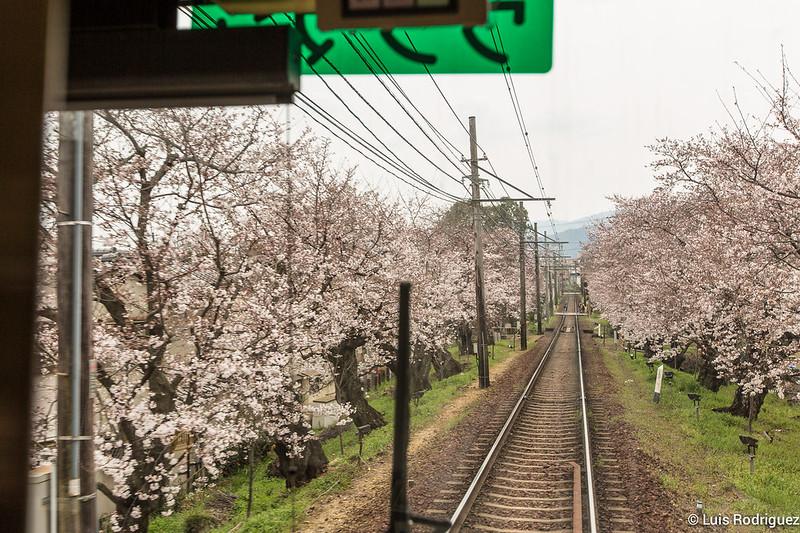 Tunel-Sakura-Kioto-Randen-49