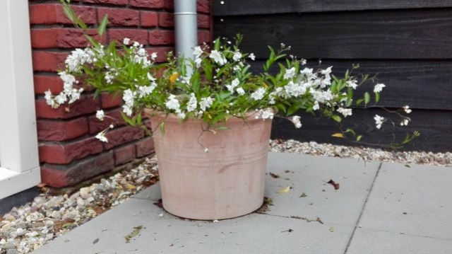 Bloempot met bloeiende plant