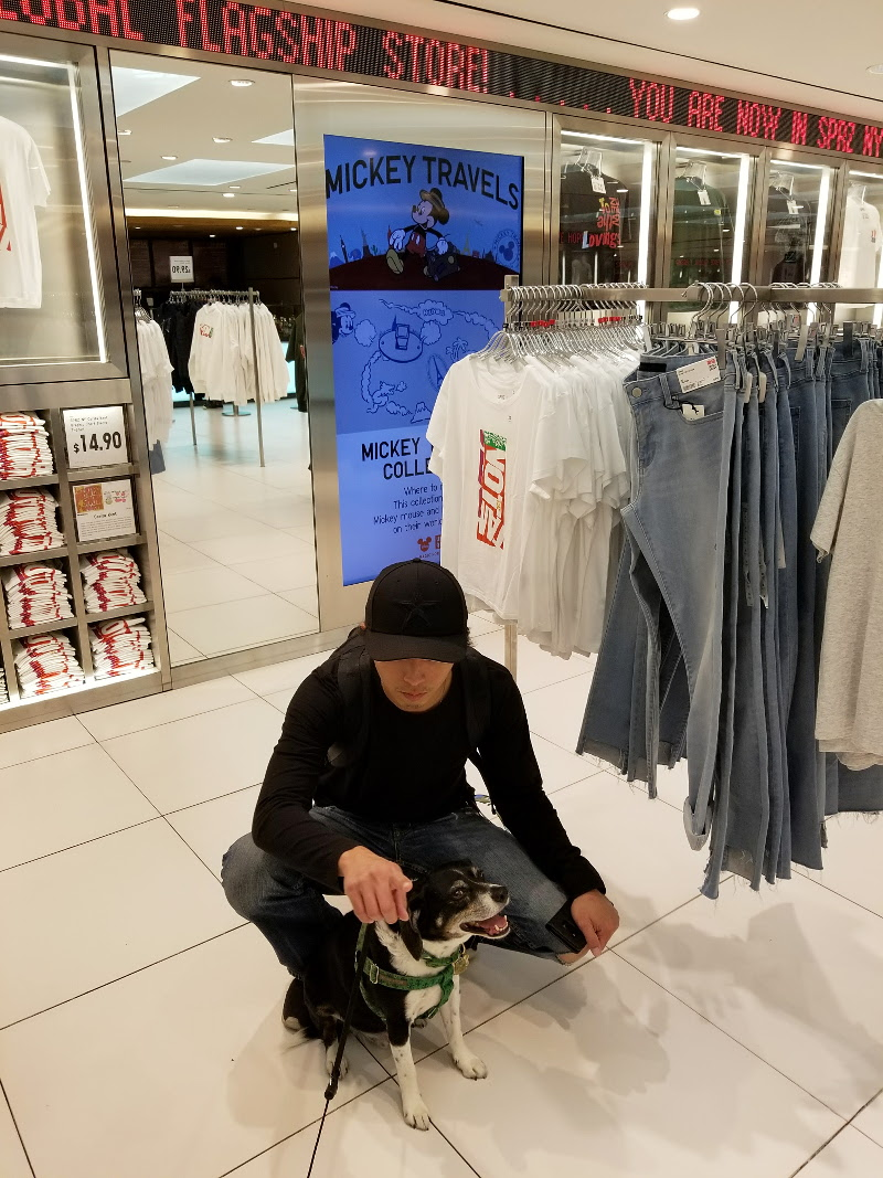 uniqlo-louis-dog-shopping-30