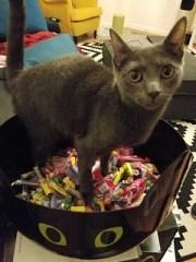 Cat in a cat candy bowl