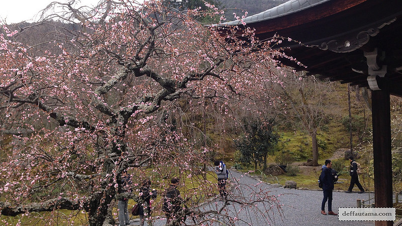 3 Hari Keliling Kyoto - Sakura Tenryuji Zen Temple