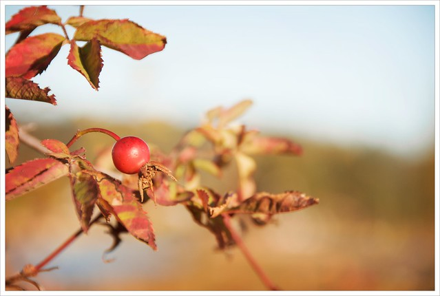 Fruits of fall