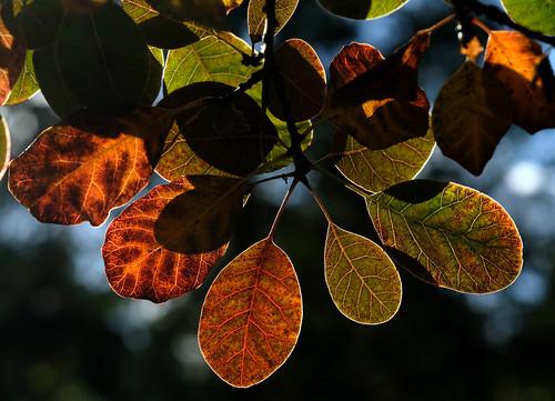 GegenDas HerbstLicht1