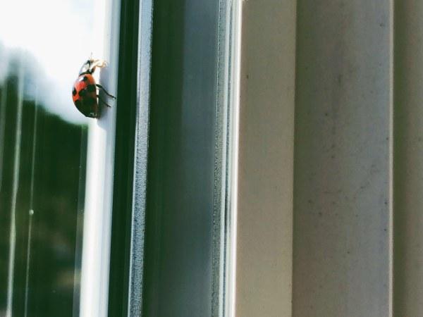 It's a lady bug