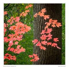 Deetail: Autumn Bling I
