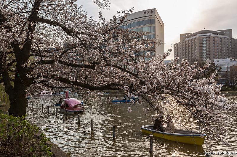 Ueno-Park-73