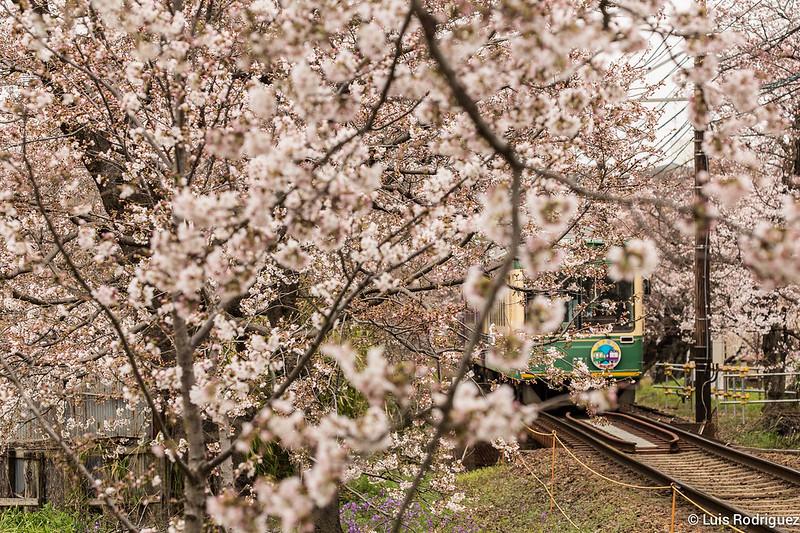 Tunel-Sakura-Kioto-Randen-29