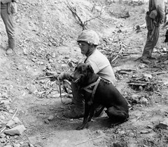 US Marine  with search dog on the Iwo Jima Feb-March 1945.