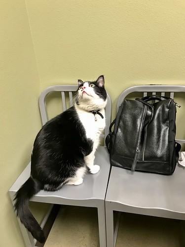 Leo's Vet Checkup