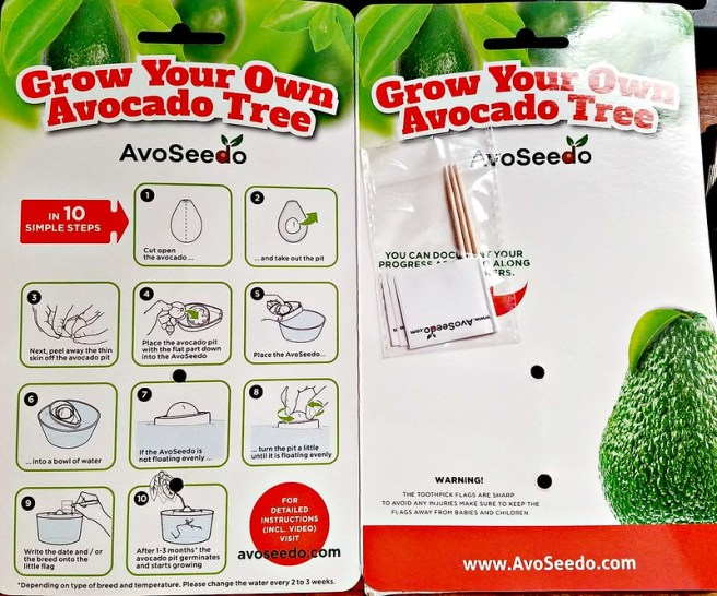 Going To Grow An Avocado Tree