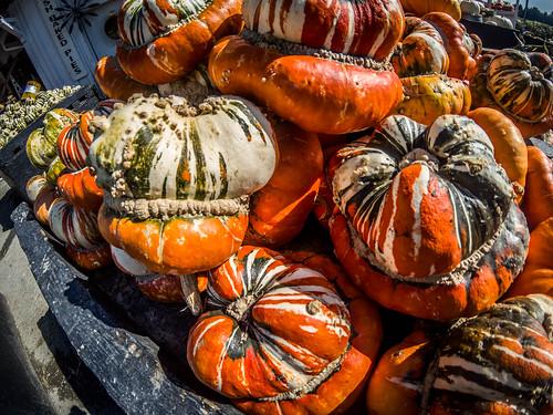 Schuh Farms and Pumpkins-014