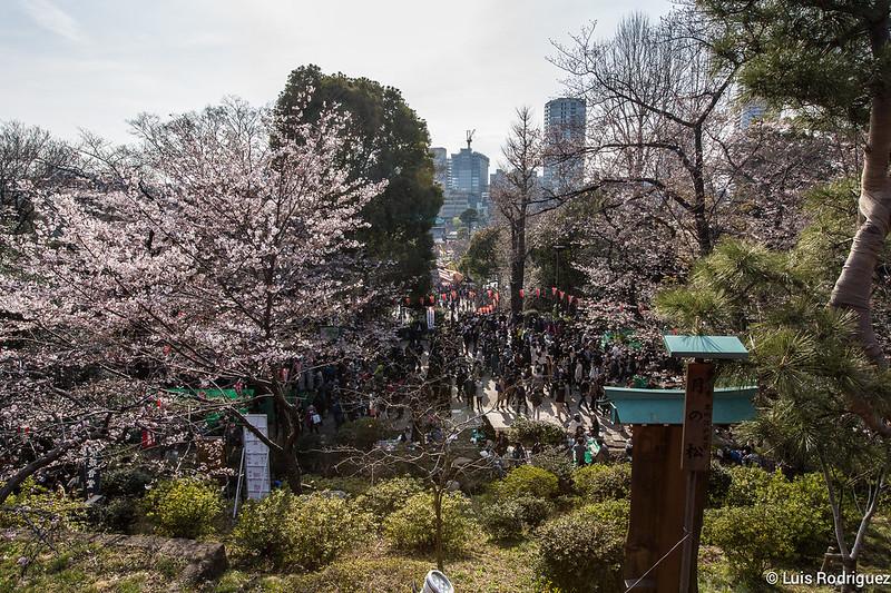 Ueno-Park-24