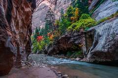 Fall Colors in the Virgin River Narrows