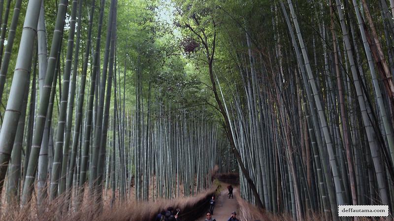 3 Hari Keliling Kyoto - Bamboo Grove 2