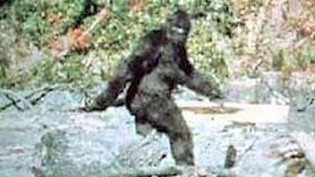 Famous Bigfoot Image