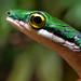 A Verde Cobra Cipó