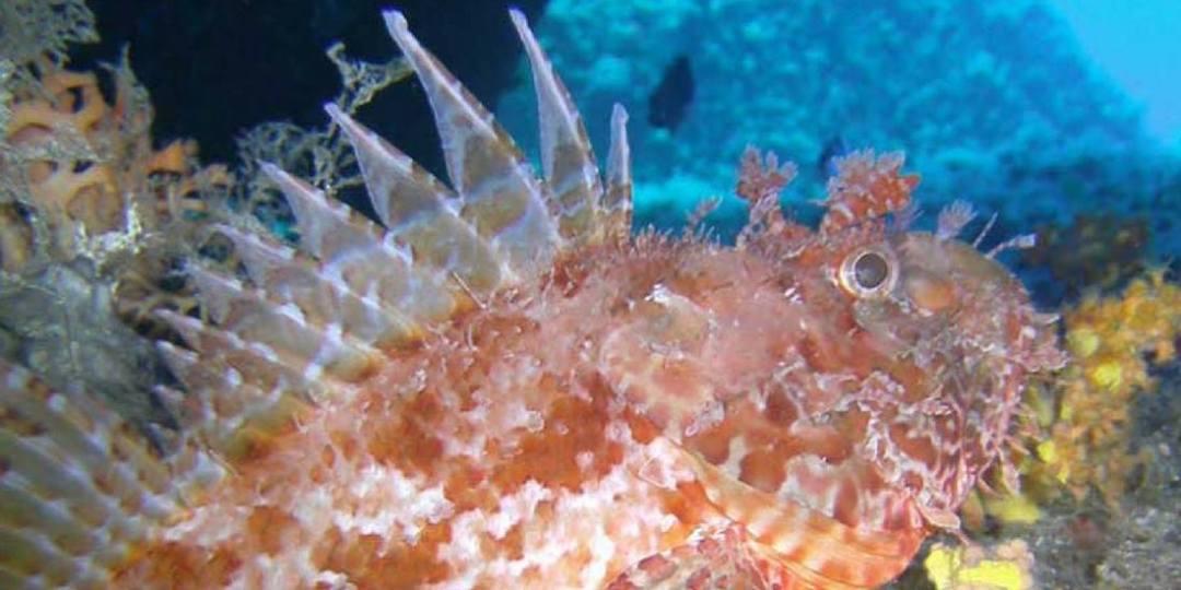 Asinara-diving
