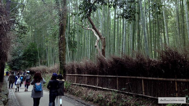 3 Hari Keliling Kyoto - Bamboo Grove 1