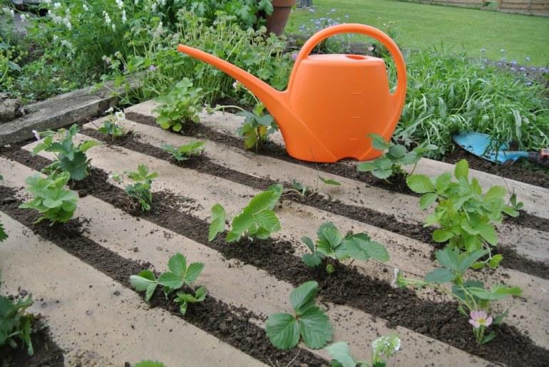 small space gardening - mini gardens