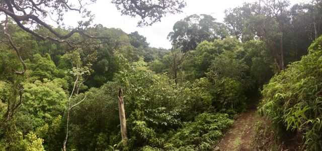 Picture from the Kaunala Trail
