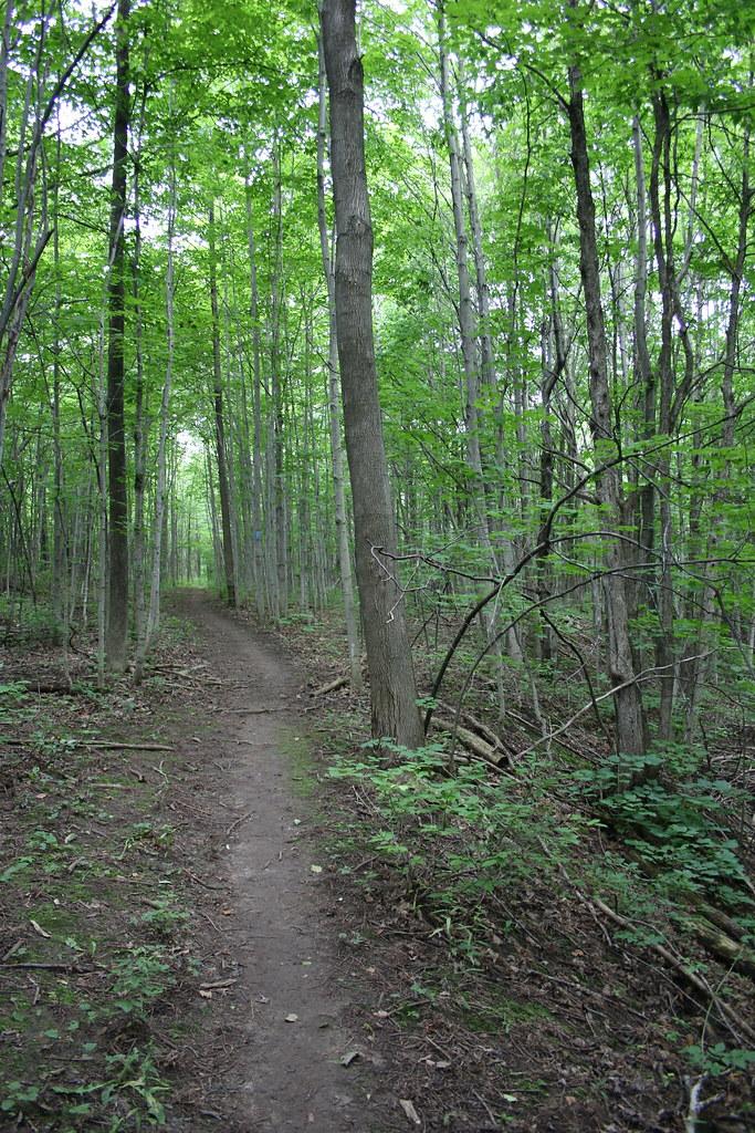 Len Gertler Memorial Loree Forest