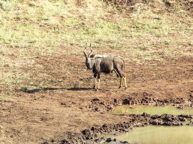 Safari en Sudáfrica