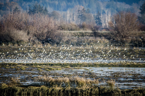 Skagit Birds and Sunset-10