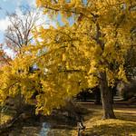 Parc Jean-Jaurès à l'automne