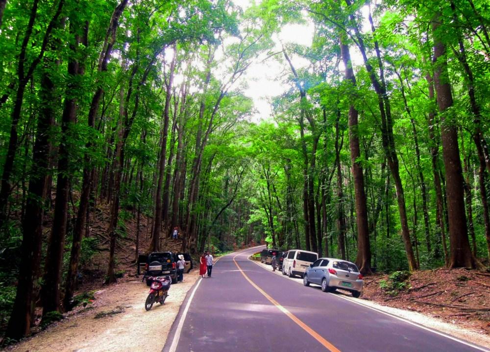 man-made-forest-bohol