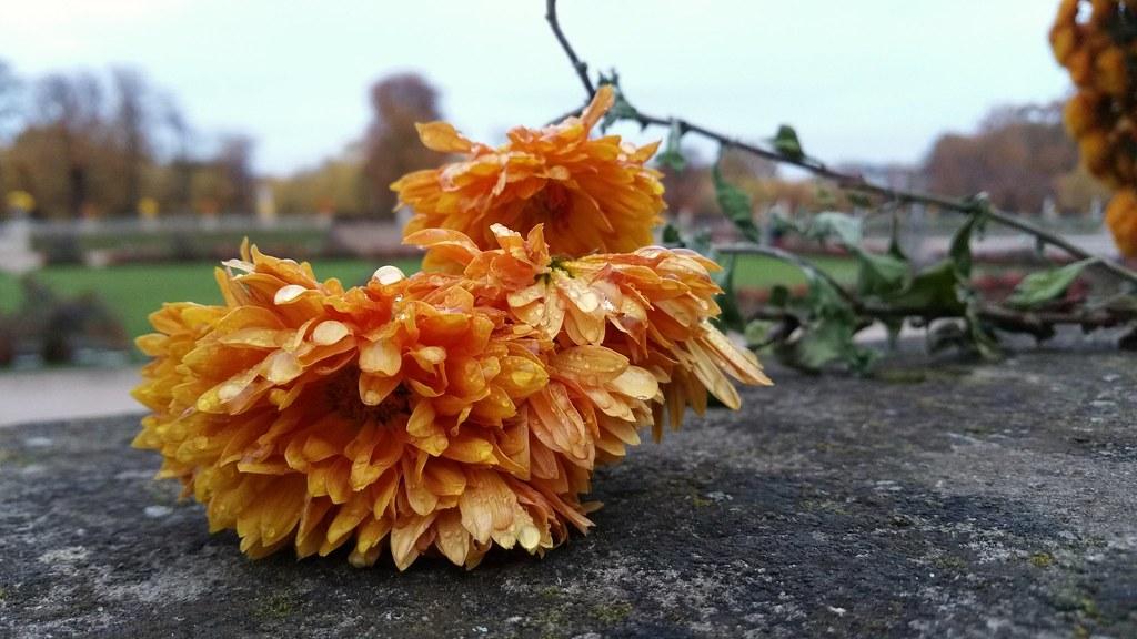 Fleur couleur du temps