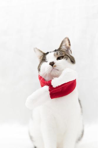 アトリエイエネコ Cat Photographer 27196724839_010570f876 保護猫カフェ&猫ホテル ねこんチ