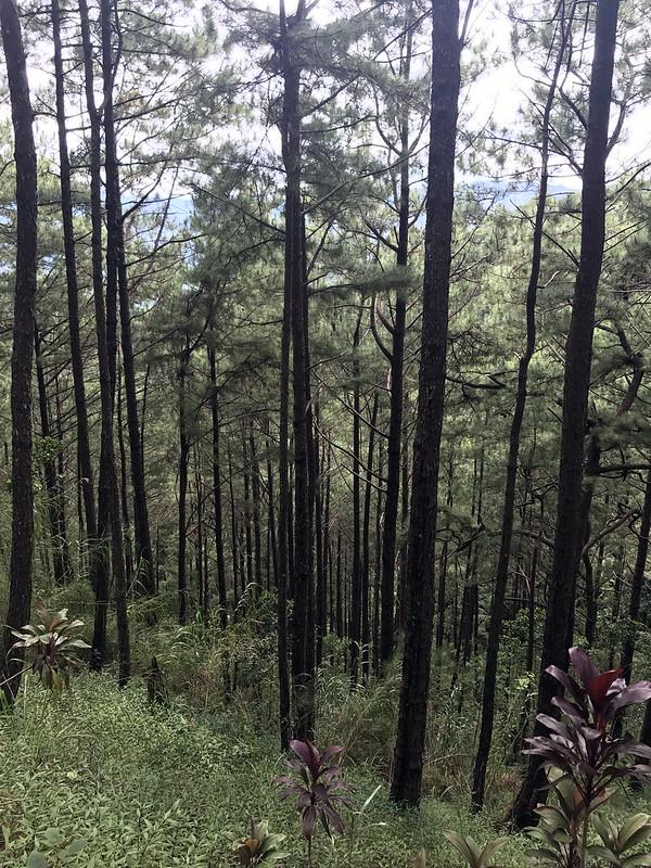 20171109_095749 Baguio - Tree Top Adventure