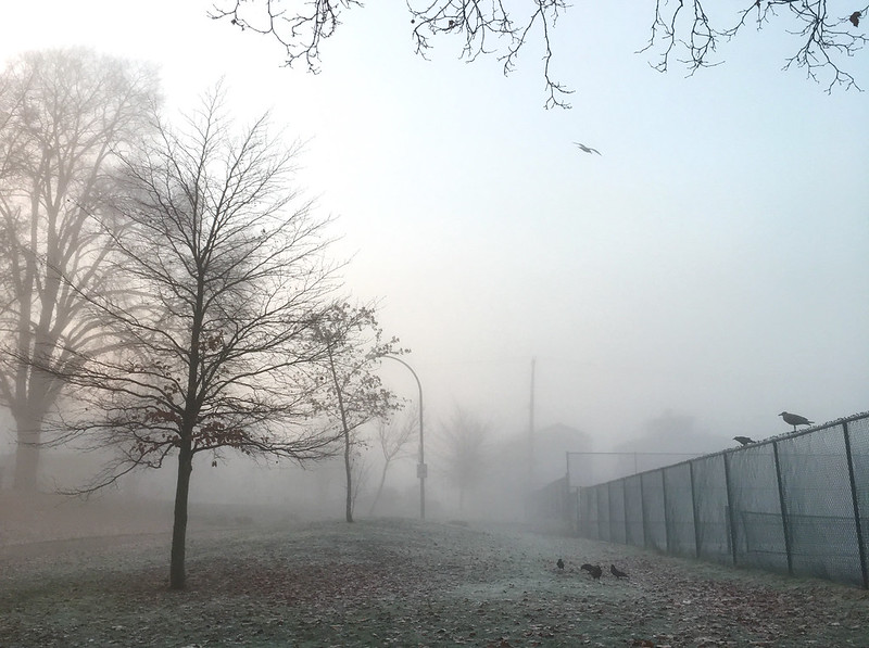 Foggy frosty morning