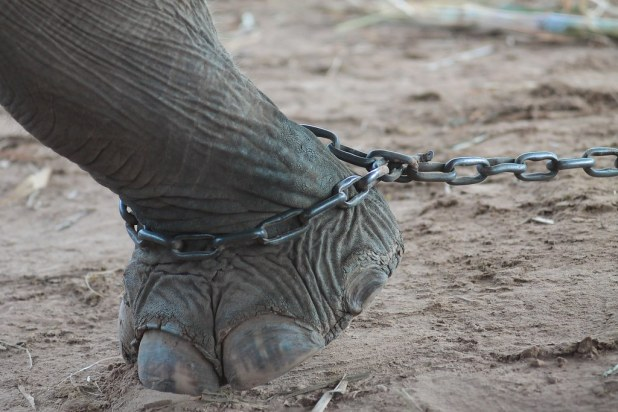 Elefantes en Tailandia