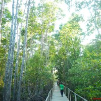 Bakhawan Eco Park: Knowing the Protector of the Shores