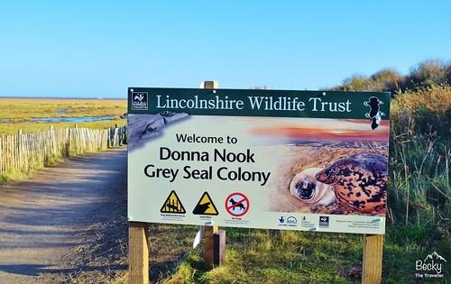 Grey seals at Donna Nook Nature Reserve - Donna Nook Seal Colony
