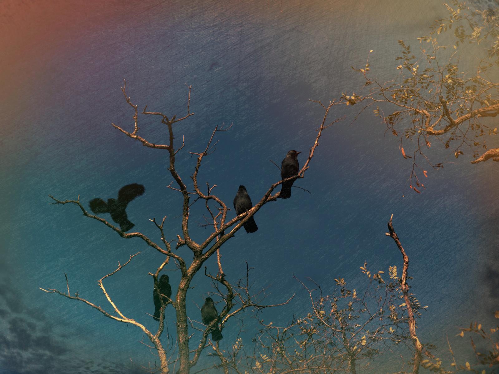 crow hangout