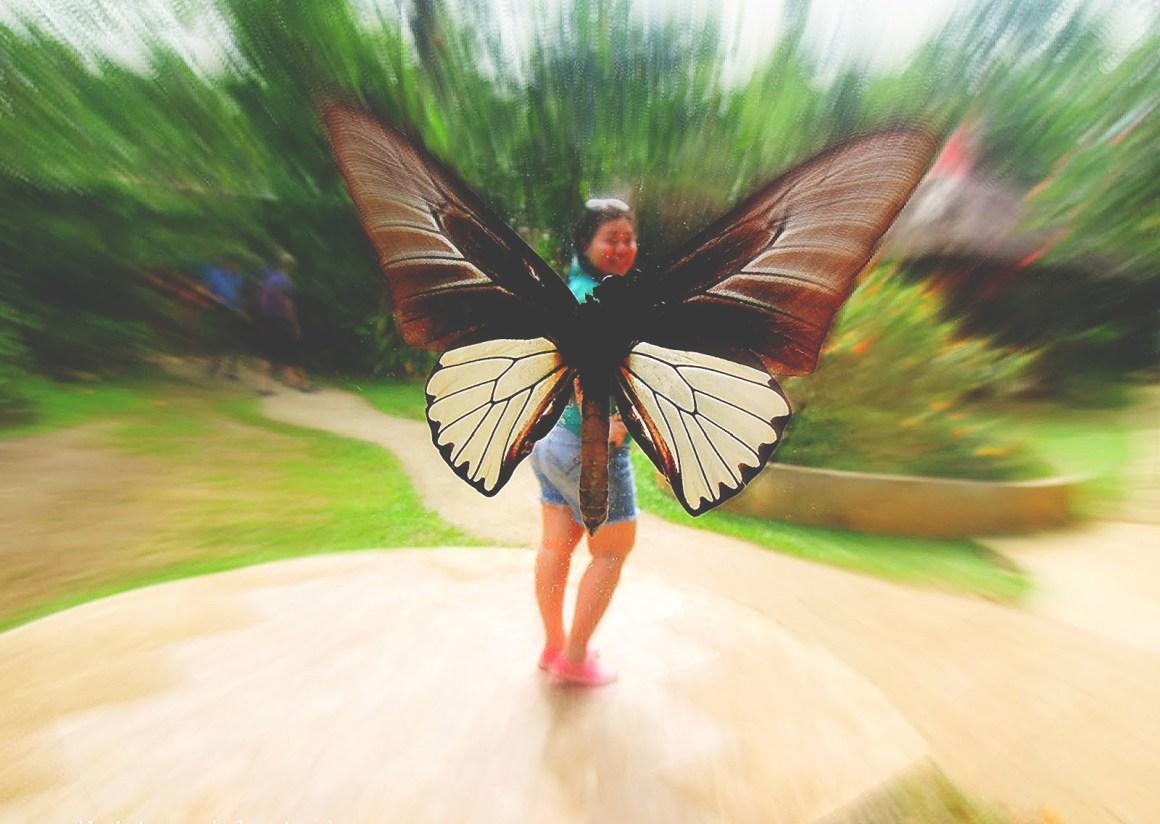 butterfly-shot