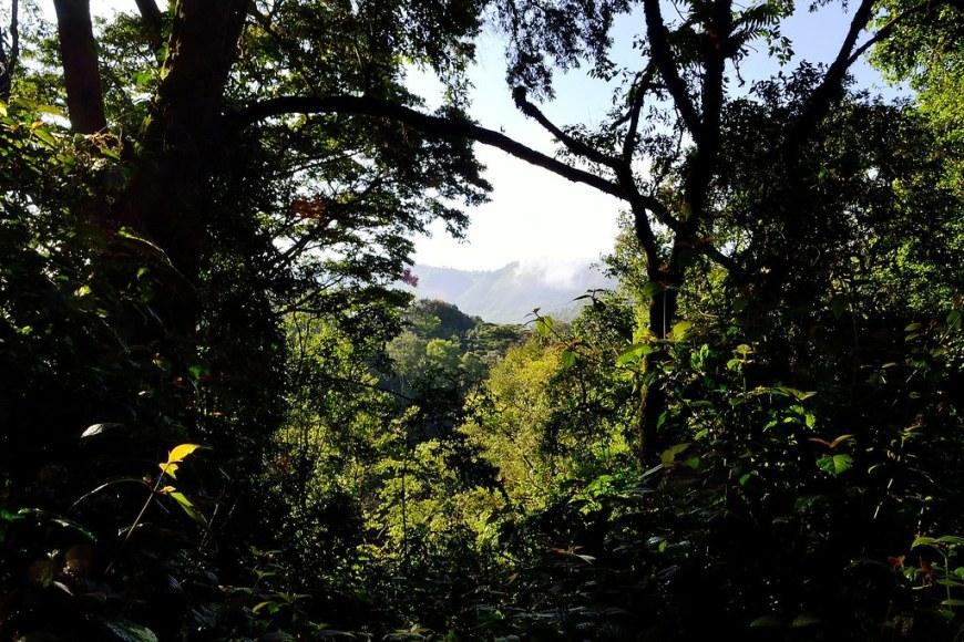 bwindi-impenetrable-forest-355180_1920