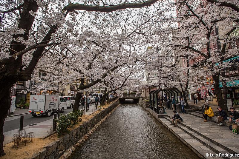 Sakura-Kiyamachi-Kioto-7