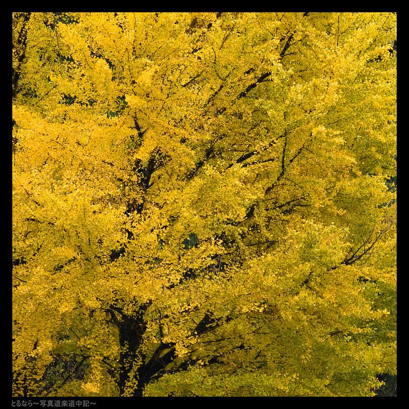 NIKON D850-850_4714-Edit-400 mm