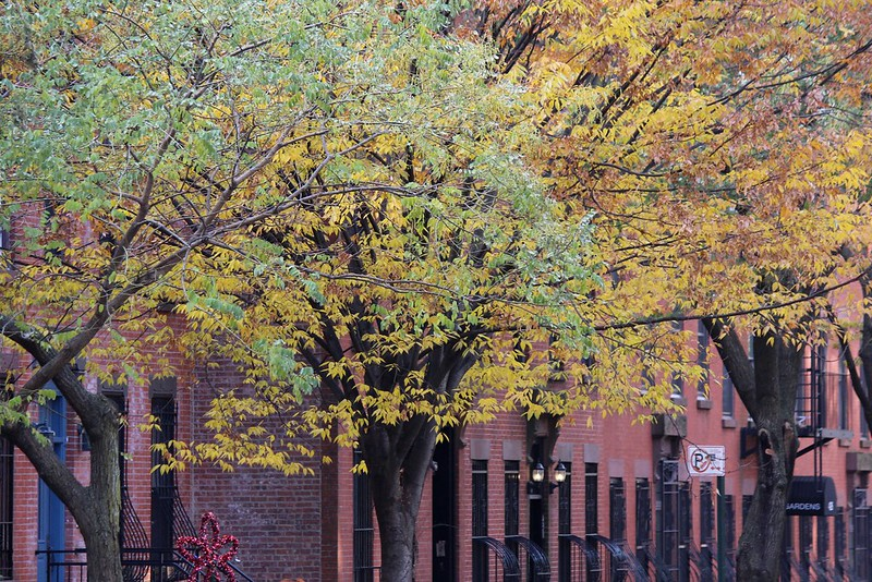 Park Slope Fall Foliage