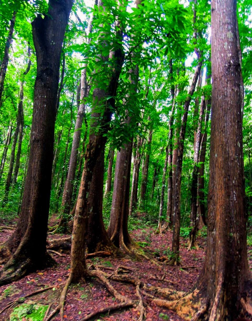 trees-bohol