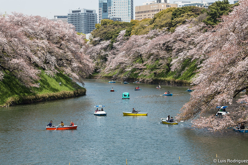 Sakura-Chidori-ga-Fuchi-Palacio-Imperial-44